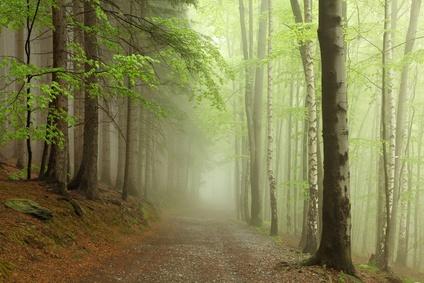 la forêt des fées